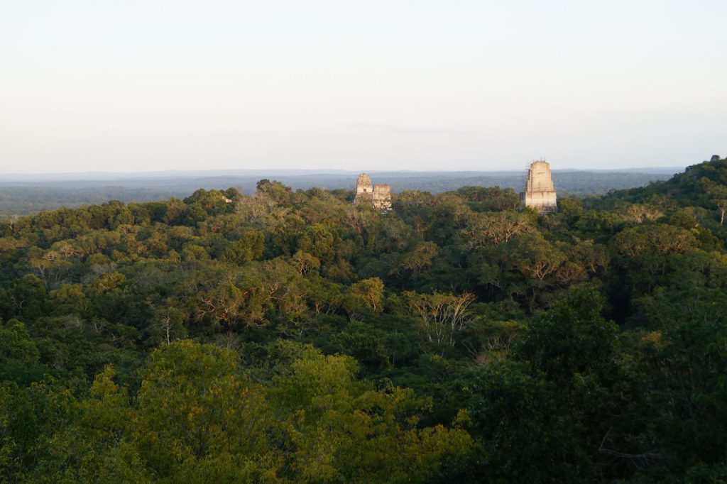 vedere peste jungla din Tikal