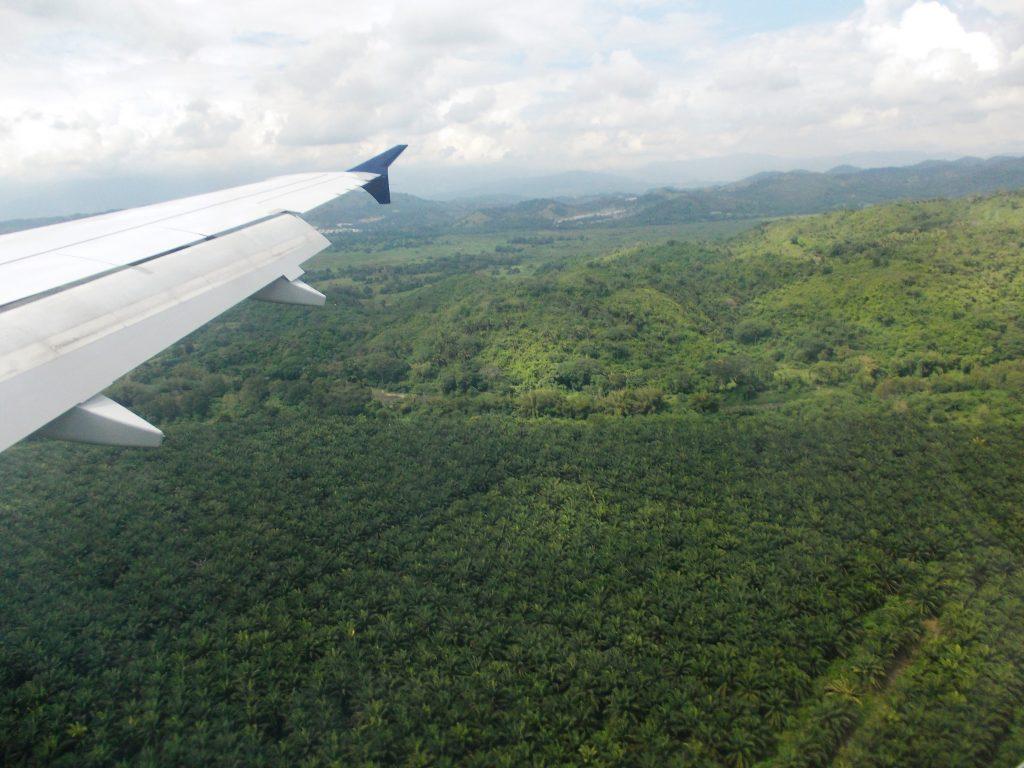 Plantaje de cocotieri care distrug jungla