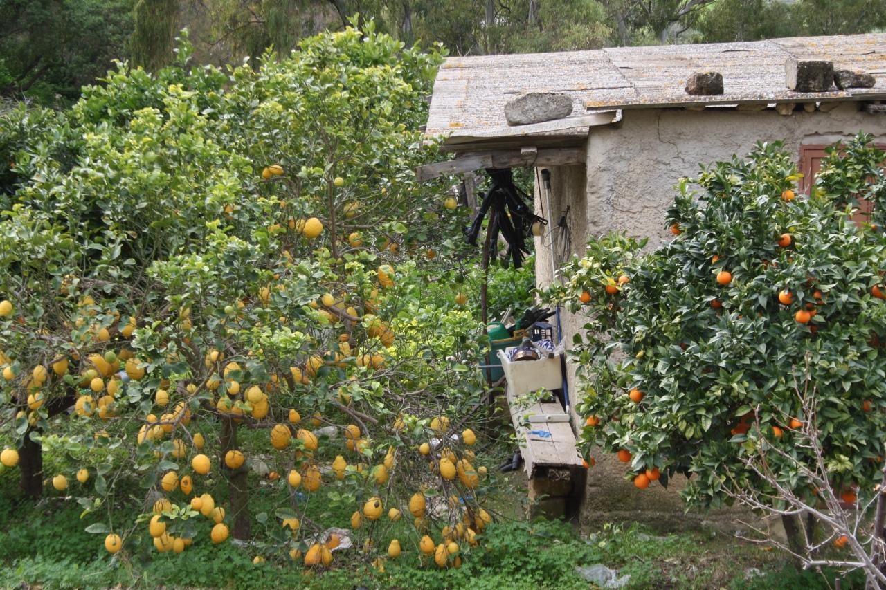 Sicilia orange